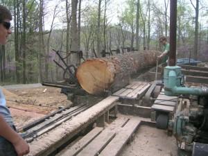 Milling New Oak Timbers