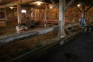 Livestock Back Home in the Parlor